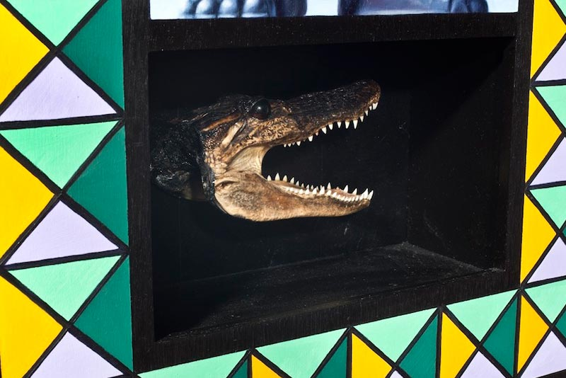 Taxidermy - Croc