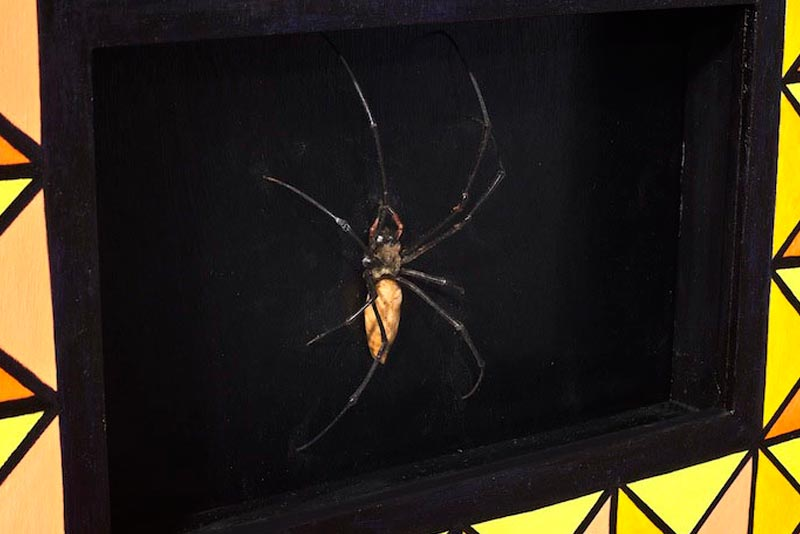 Taxidermy - Spider